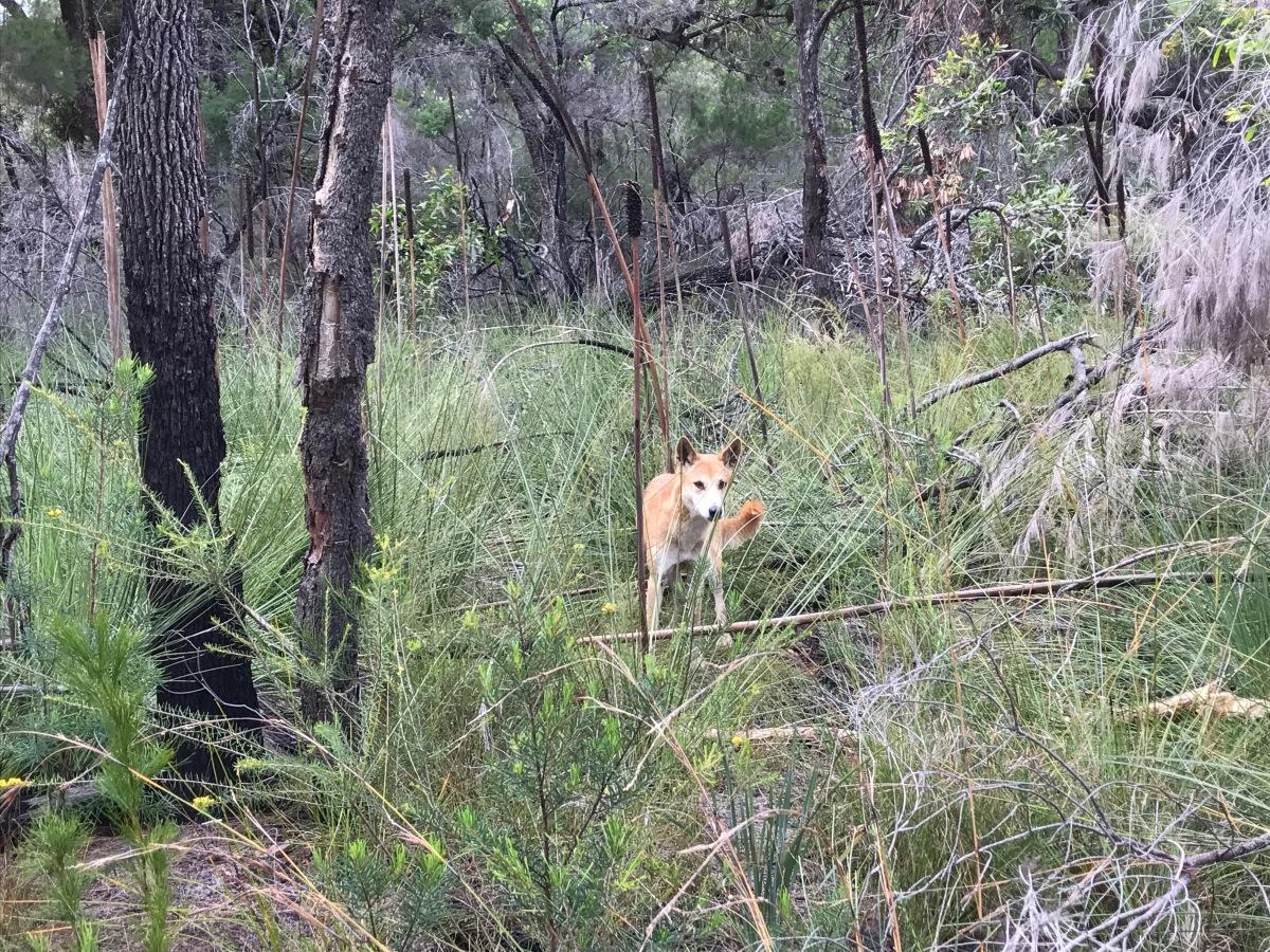 2017 April_Fraser Island4